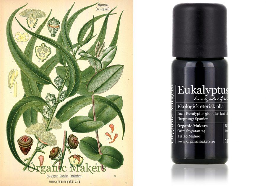 eterisk olja eukalyptus