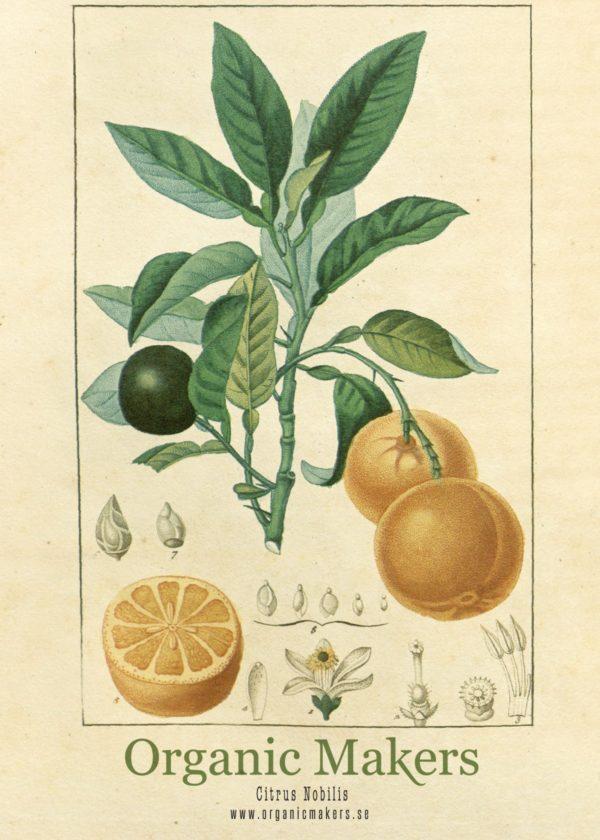 Eterisk olja Mandarin - Ekologisk